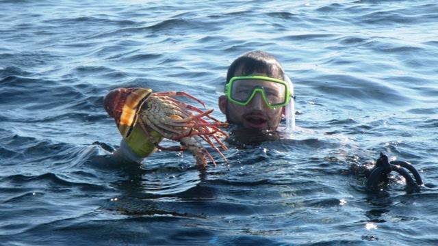 lobsterimwasser