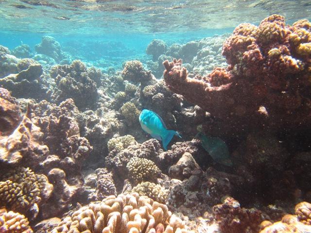 Uwasserkorallen