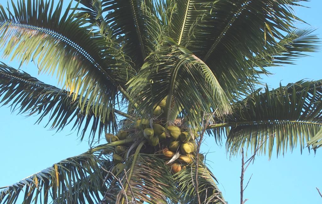 Wo Ist Die Kokosnuss Wo Ist Die Kokosnuss Muktuk